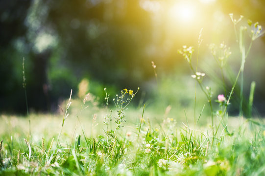 Green grass in the summer forest in the sunlight. Green nature background