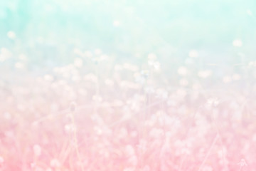 Sweet and pastel color  flower ,Soft and blurry focus photo in vintage style,blurry image