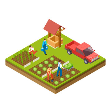 Gardening and harvesting vector 3d isometric concept. Collect harvest and grow agriculture illustration