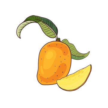 Mango.Tropical fruit with slices and green leaves on white background.