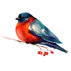 Bullfinch on a branch illustration. Isolate