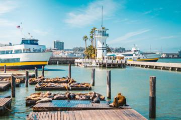 Fototapete - San Francisco Pier 39 with famous sea lions, California, USA