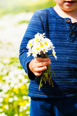 Cute Little Kid Is Holding A Bouquet Of Daisy Flower. Sunny And Spring Flower Field.