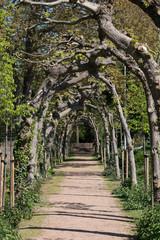 Laubengänge am Schloss Bedburg