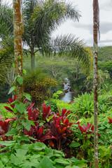 River flowing amid lush tropical vegetation, red and green plants and trees, Aadheenam Hindu Monastery, Kauai, Hawaii, USA