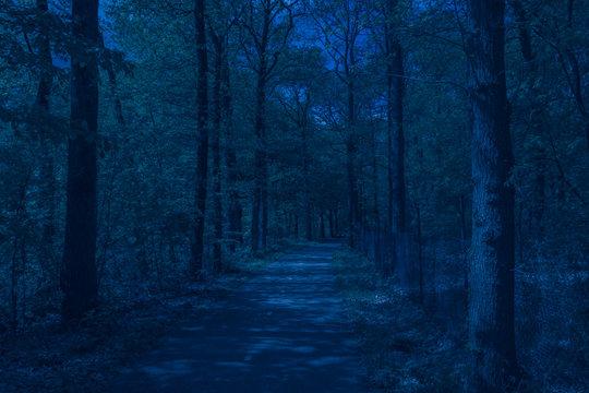 path through dark forest at night