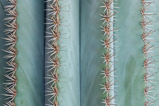 close up of big thorns on cactus plant