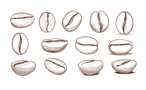 Coffee bean icon set. Hand drawn doodle sketch vector symbol of