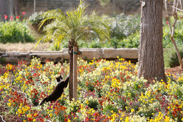 Cat sharpens its claws on a small palm tree at the gardens of San Anton Palace, the official residence of Malta's President, in Attard