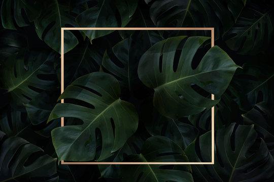 Golden frame on leaves