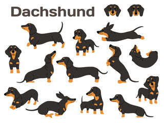 dachshund,dog in action,happy dog