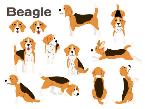 beagle,dog in action,happy dog