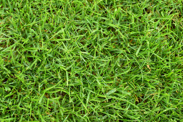 Papiers peints Herbe Lawn green grass cutted top view
