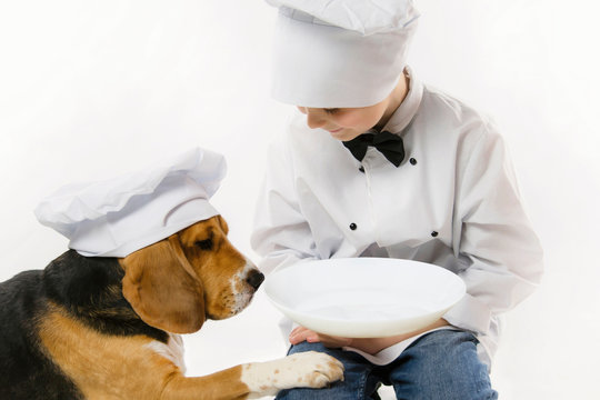 funny boy in chef uniform and cute beagle dog in chef's cap cook dinner