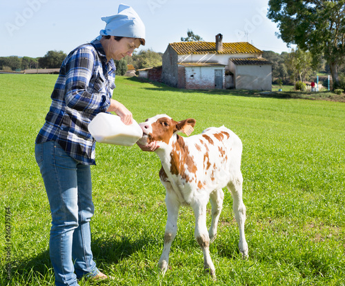 female employee feeding newborn calf on grass pasture