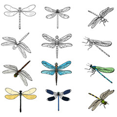 vector, isolated, insects dragonflies, set collection, sketch
