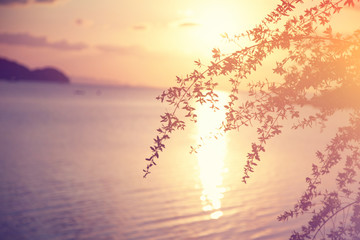 Fototapete - beautiful abstract background, sunset at sea in soft focus, through the branches of a tree