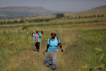 Barbra Ndlovu carries a garden hoe as she arrives  to work her land at Lawley informal settlement in the south of Johannesburg