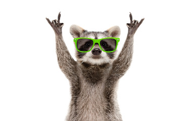 Funny raccoon in green sunglasses showing a rock gesture isolated on white background Wall mural
