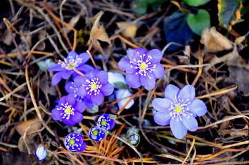 Flower Spiring Forest