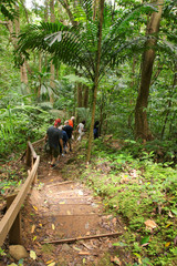 Hiking Trail in the rainforest of St. Lucia - Lesser Antilles