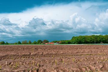 Schönes Landschaftsbild mit Spargelfeld im Vordergrund. Standort: Deutschland, Nordrhein-Westfalen, Heiden