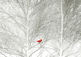 A cardinal is seen in a tree in a snowstorm.