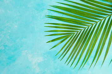 Tropical palm leaf on blue background. Top view. Copy space. Wall mural