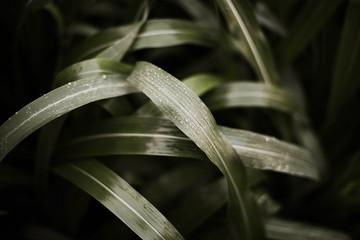 Green grass after the rain.