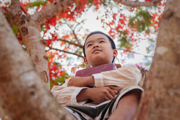 A boy in a reading a book on a large spreading tree. The big tree large red flowers.
