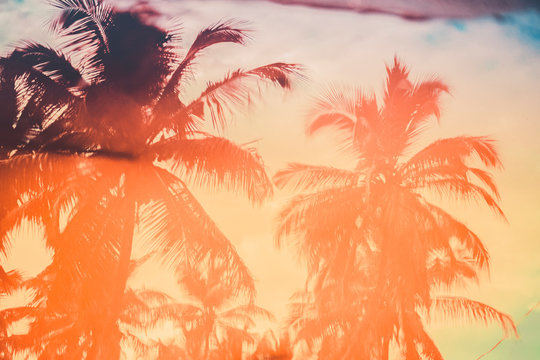 Colorful palm tree reflections in a pool; summer abstract background