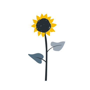 Ripe sunflower cartoon sketch with big blossom and seeds sketch. Isolated vector illustration on black background.