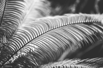 nature poster. leaf of palm