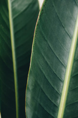 Mecro detail of two tropical leaves