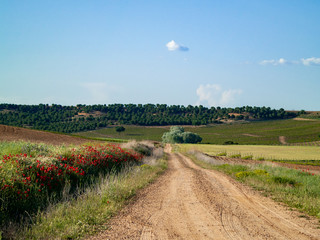 A rural dirt road in the field in spring