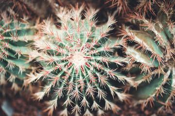 nature poster. cactus