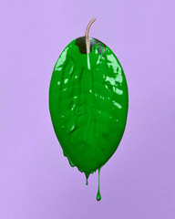 green leaf isolated on purple background
