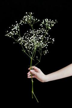 Girl holding gypsophila