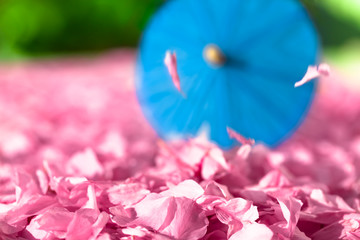 Asian Spring Scene / Heap of cherry blossoms and falling petals at asian park background with blue parasol (copy space)