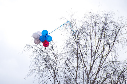 Pink balloons on a tree branch, balloons caught on tree