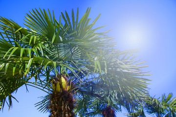 Tropical palm trees backlit with sun ray. Summer travel holidays vacation. Colorful concept photo