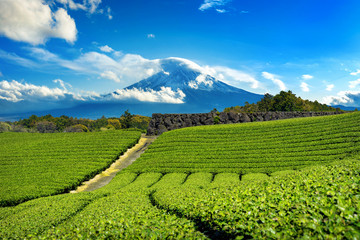 Wall Mural - Fuji mountains and green tea plantation in Shizuoka, Japan.