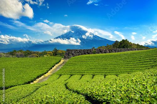 Wall mural Fuji mountains and green tea plantation in Shizuoka, Japan.