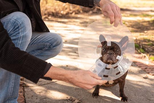 Man putting his dog medical plastic Elizabethan collar  on the street