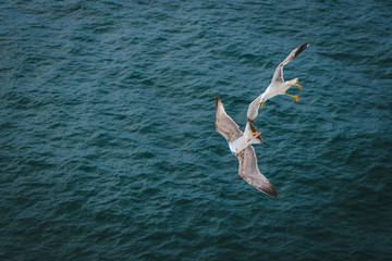 Seagull in flight on seabed