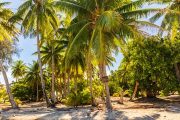 Wall Murals Island Palm trees on beach island getaway lush tropical background. Exotic travel destination.