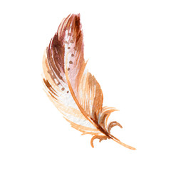 Brown Bird Feather from Wing. Watercolor Illustration on White Background. Watercolour Drawing Fashion Aquarelle. Isolated Feathers Illustration Element