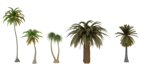 Palm Tree Collections