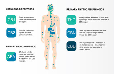 human endocannabinoid system is infographic backgrounds.