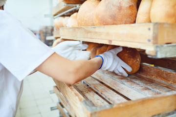 Baker hands lay fresh bread at the bakery.